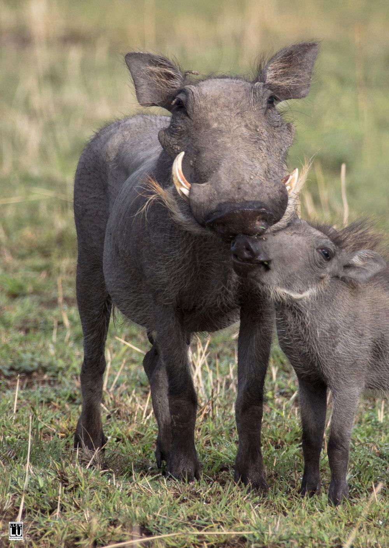 Pumbaa and baby.