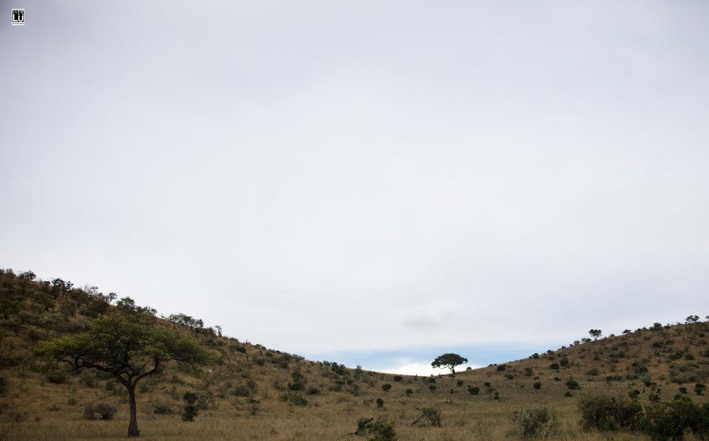 Landscape at Masai Mara.