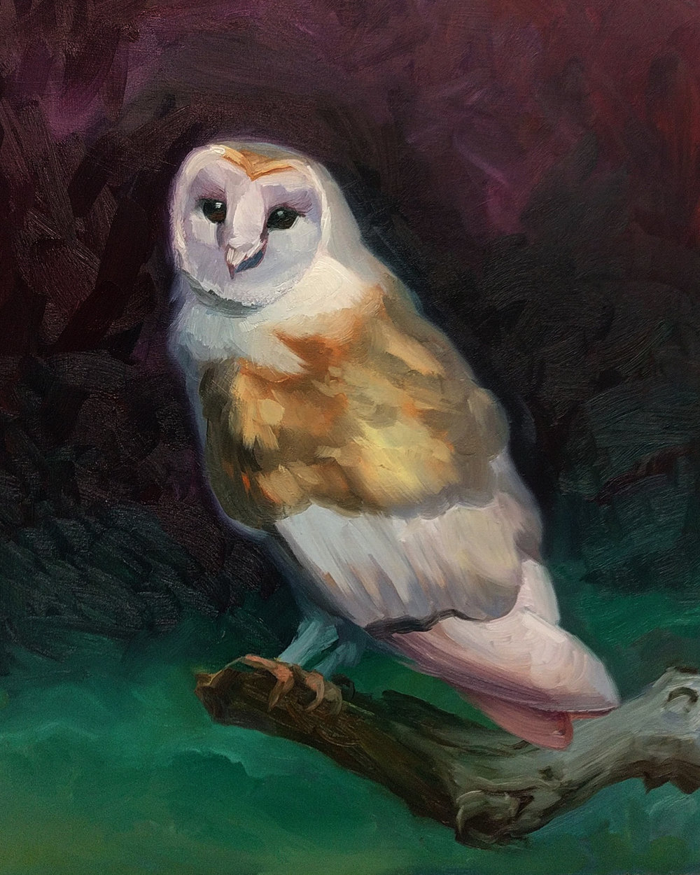 Colorful Barn Owl