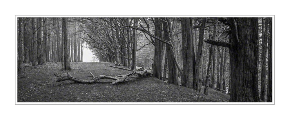 Fallen Tree, Half Moon Bay, Moss Beach. Ilford FP4, Fuji gx617 90mm