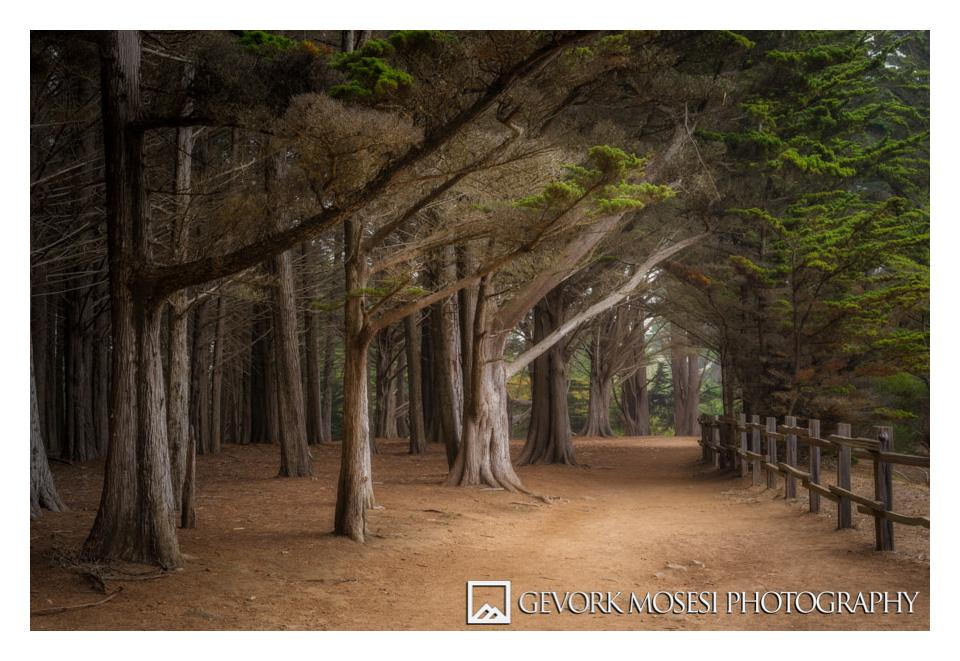 gevork_mosesi_photography_landscape_trees_califonia_half_moon_bay_moss_beach_fitzgerald_marine_reserve-6.jpg