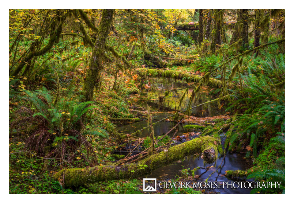 gevork_mosesi_photography_landscape_hoh_rainforest_olympic_national_park_fall_autumn-1.jpg