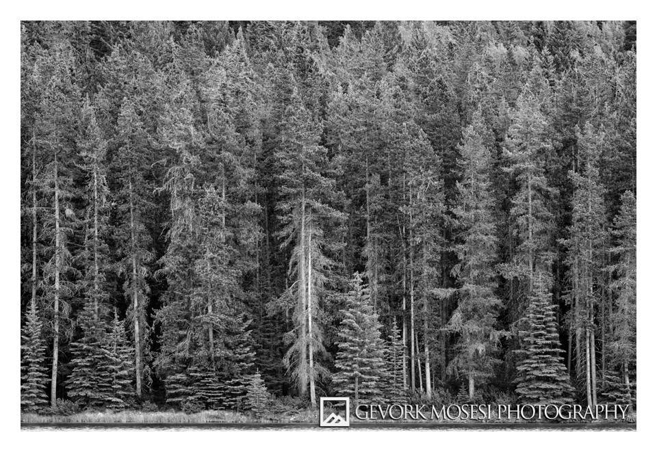 gevork_mosesi_photography_landscape_banff_alberta_canada_trees_two_jack_lake.jpg