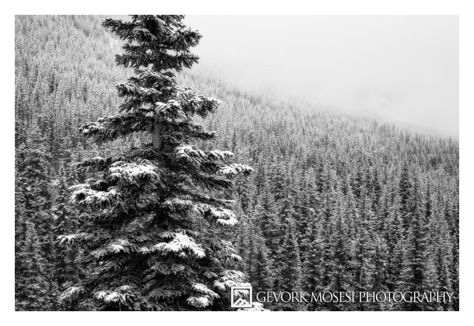 gevork_mosesi_photography_landscape_banff_alberta_moraine_lake_sunrise_pine_trees_snow-3.jpg