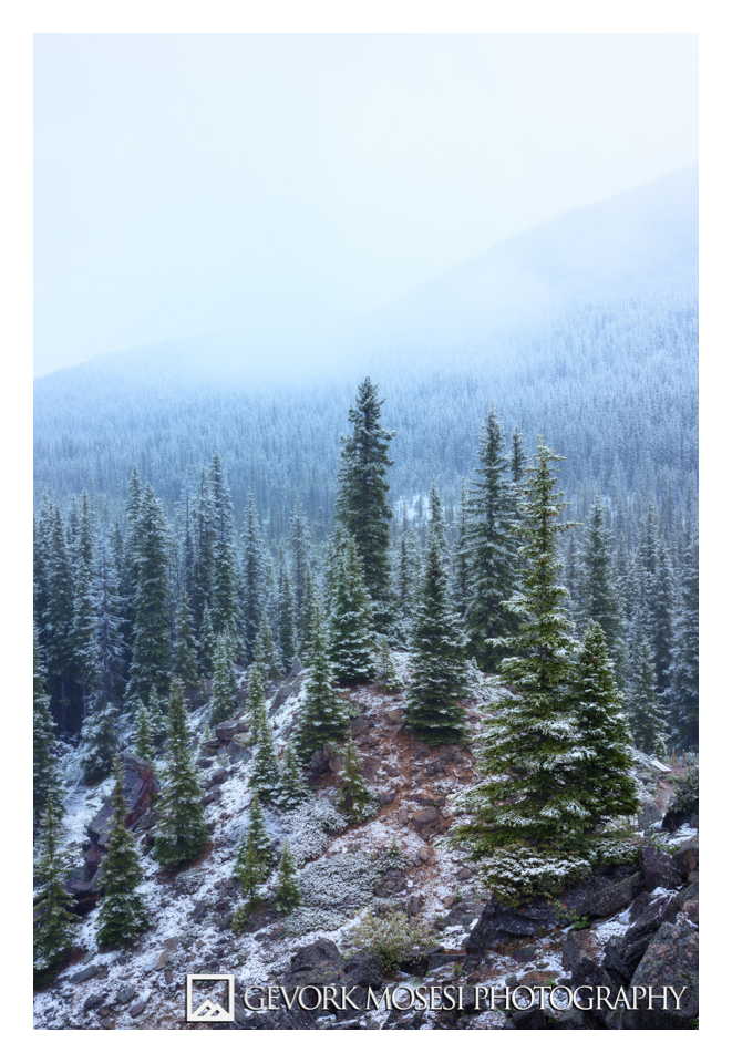 gevork_mosesi_photography_landscape_banff_alberta_moraine_lake_sunrise_pine_trees_snow-3-3.jpg