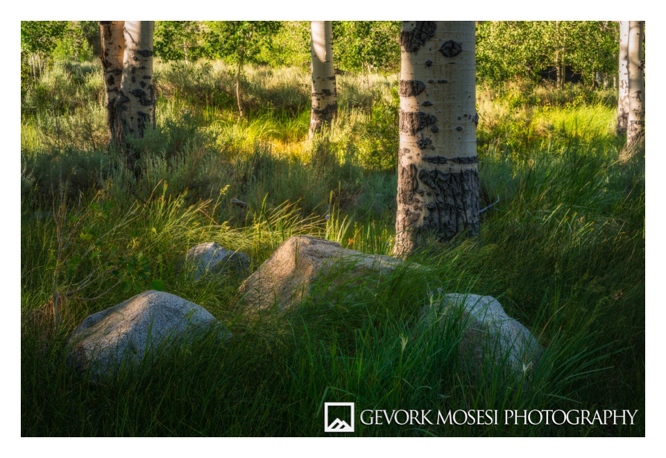 gevork_mosesi_photography_trees_grass_mono_lake_aspen_sierras_sunset-1.jpg