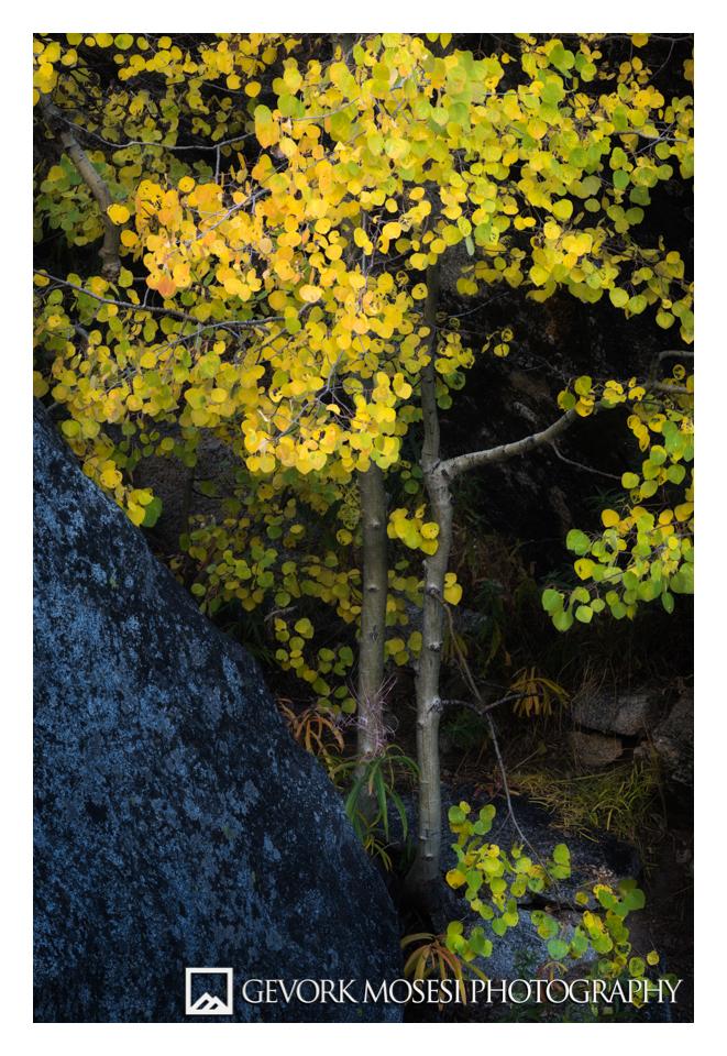 gevork_mosesi_photography_autumn_fall_eastern_sierras_lake_sabrina_bishop_california_colors_Aspen_trees_leaves-1.jpg