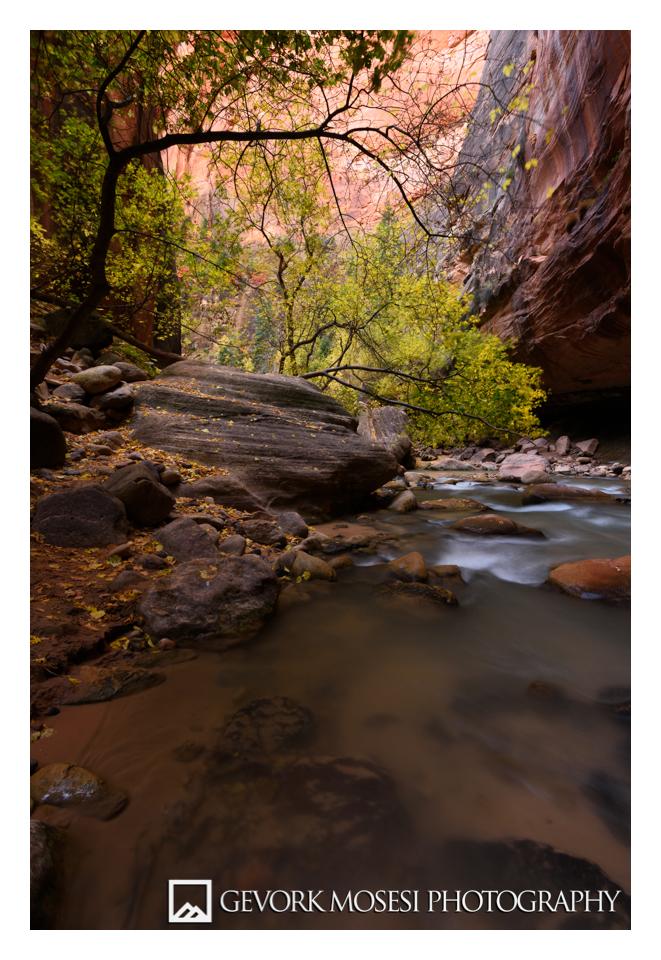 gevork_mosesi_photography_zion_national_park_autumn_fall_foliage_cottonwood_watchman_virgin_river_narrows-1.jpg