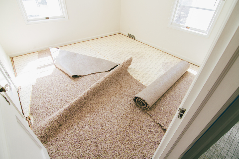 See ya carpet.