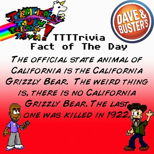 😓 although I've seen what the much smaller black bear can do to a car and I'm glad to have never run into a grizzly bear. Learn more #heartbreaking #animal #trivia every #tuesdaynight 9pm at #daveandbustersla for #ttttrivia #tuesdaytrivia #hollywood #california #losangeles #lanightlife #hollywoodnightlife #lalife
