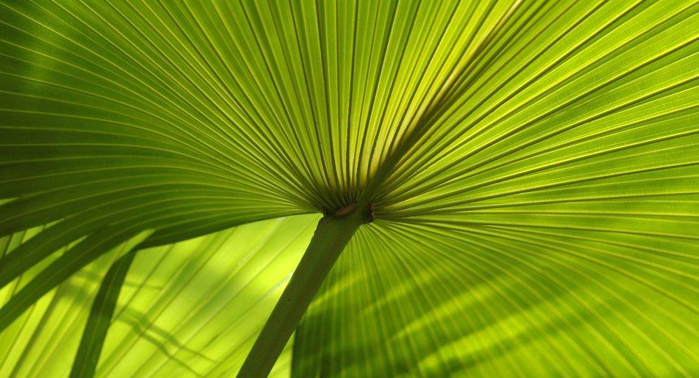 Palmjpeg.jpg