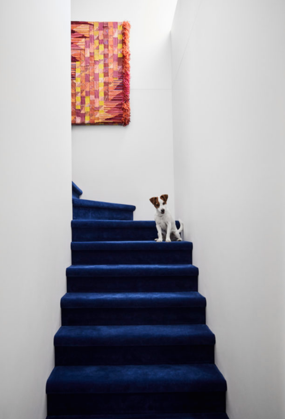 Navy blue feature carpet