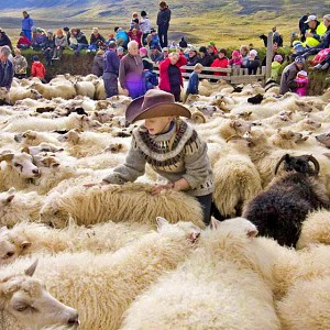 Icelandic wool and the knitting culture of Iceland -