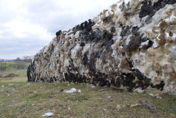 wall-of-wool-day-one-3-for-.jpg