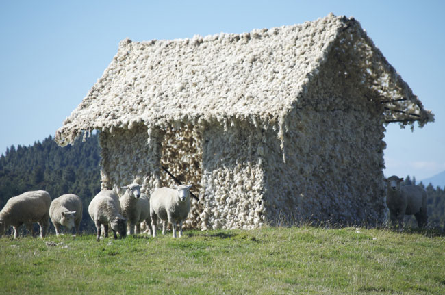sheep-outside-for-web.jpg