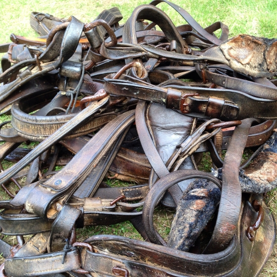 Horse harness from Vermont, cleaned with TLC and lanolin