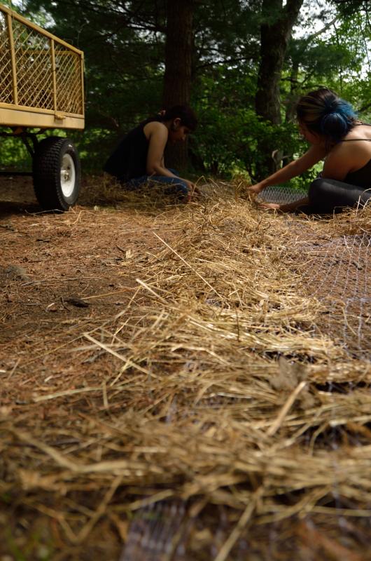 weaving hay