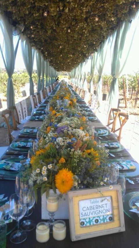Dinner in the vineyard