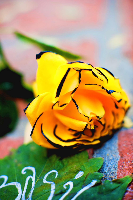 paintedflower2.jpg