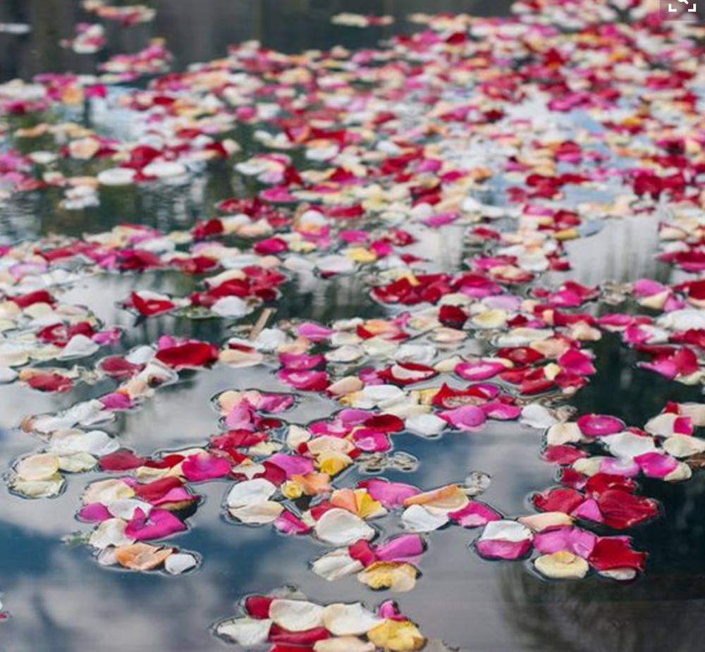 Petals in pool