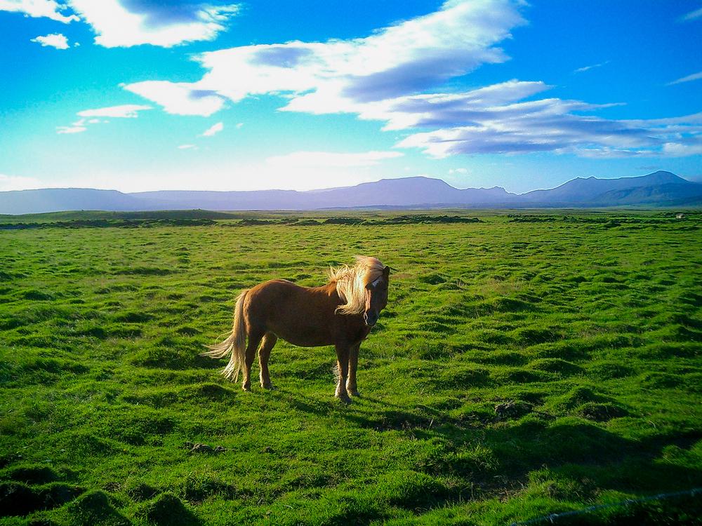 2006 Iceland (1 of 1)-2.jpg