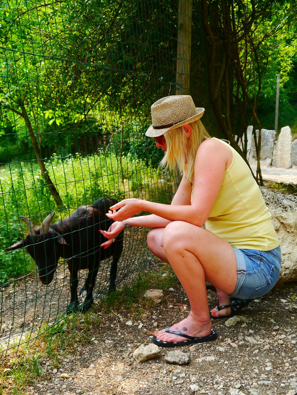 An Italian Goat