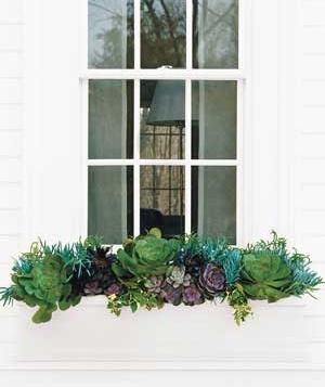 window-plants_300.jpg