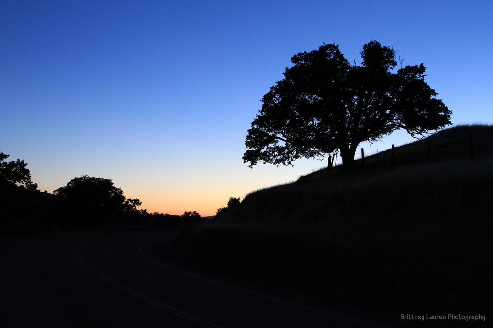 Lone_Tree_1_1_sig.jpg