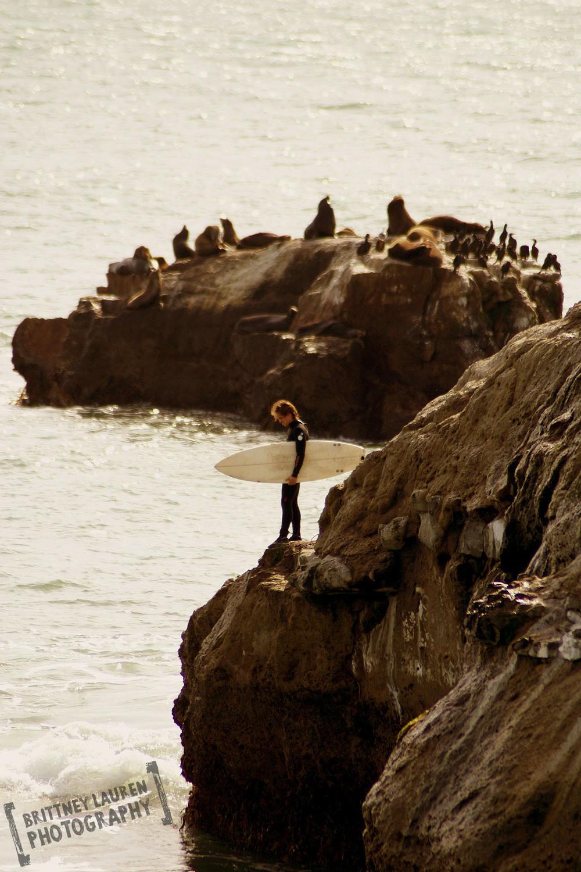surfer_seals_2008_sig.jpg