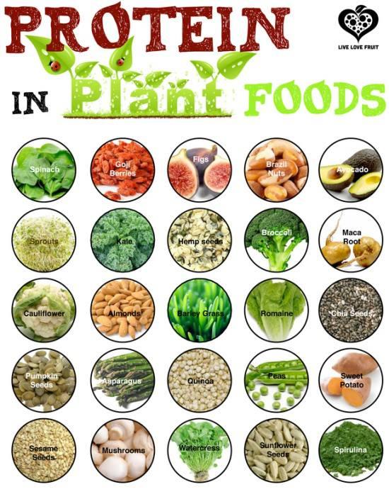 protien in plant foods.jpg