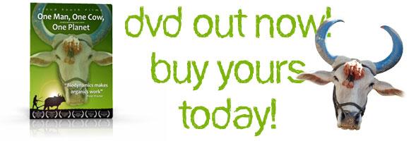 dvdout-buy.jpg