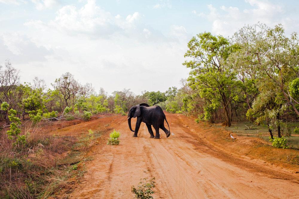 Mole-National-Park-Elephant.jpg