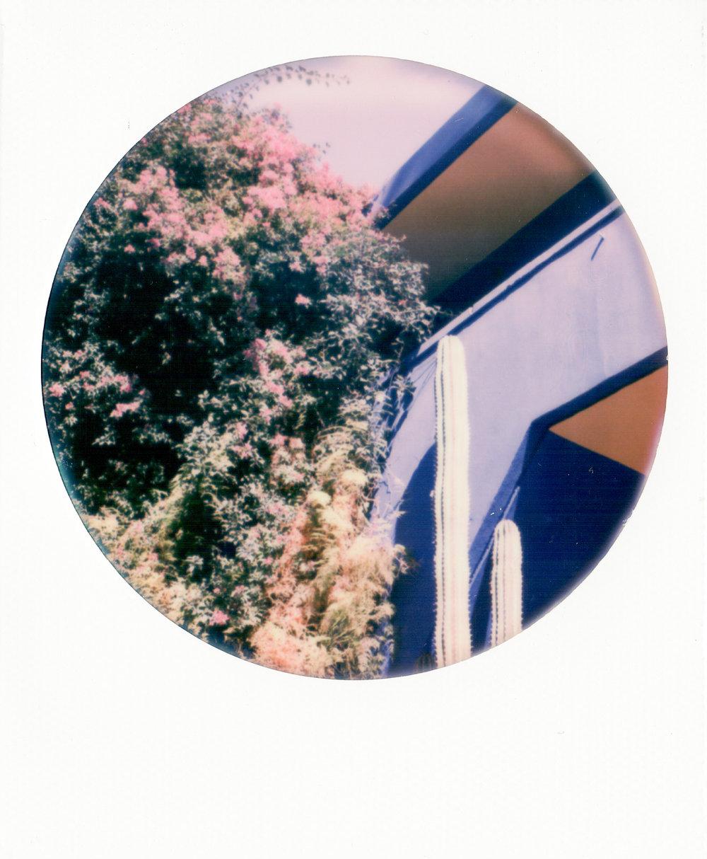 SX-70_Polaroids-13.jpg