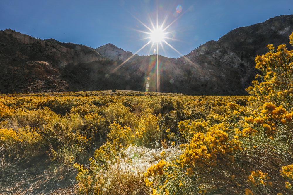 Nevada Gold Fields