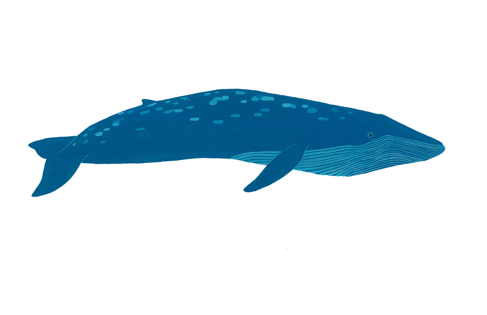 Blue Whale 2014. Gouache.  SOLD