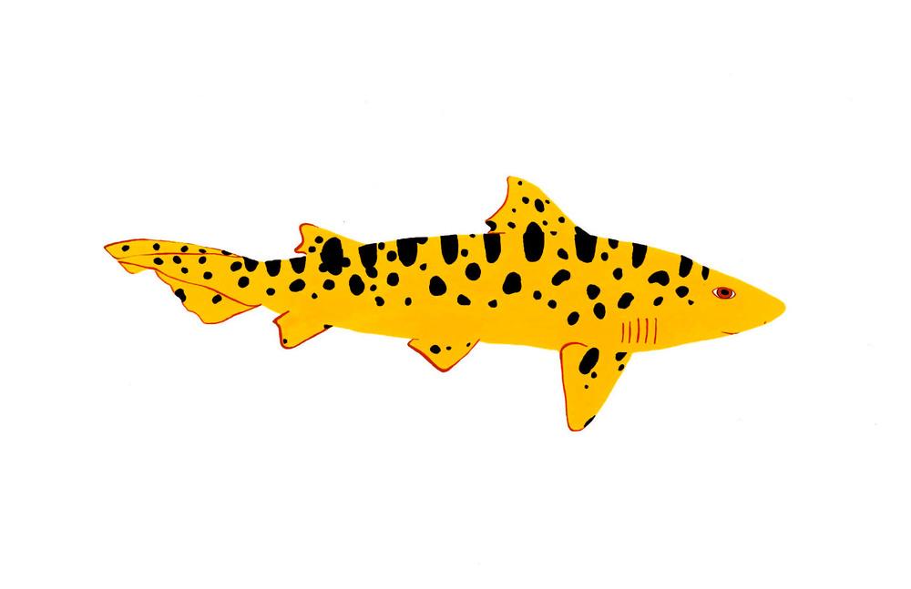 Leopard Shark 2014. Gouache.