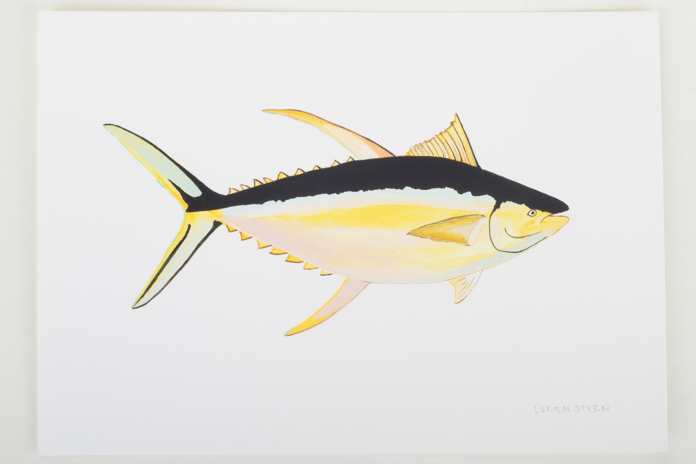 "Yellowfin Tuna 2015- 5"" x 7"". Gouache on 100% cotton acid free Stonehenge Paper"