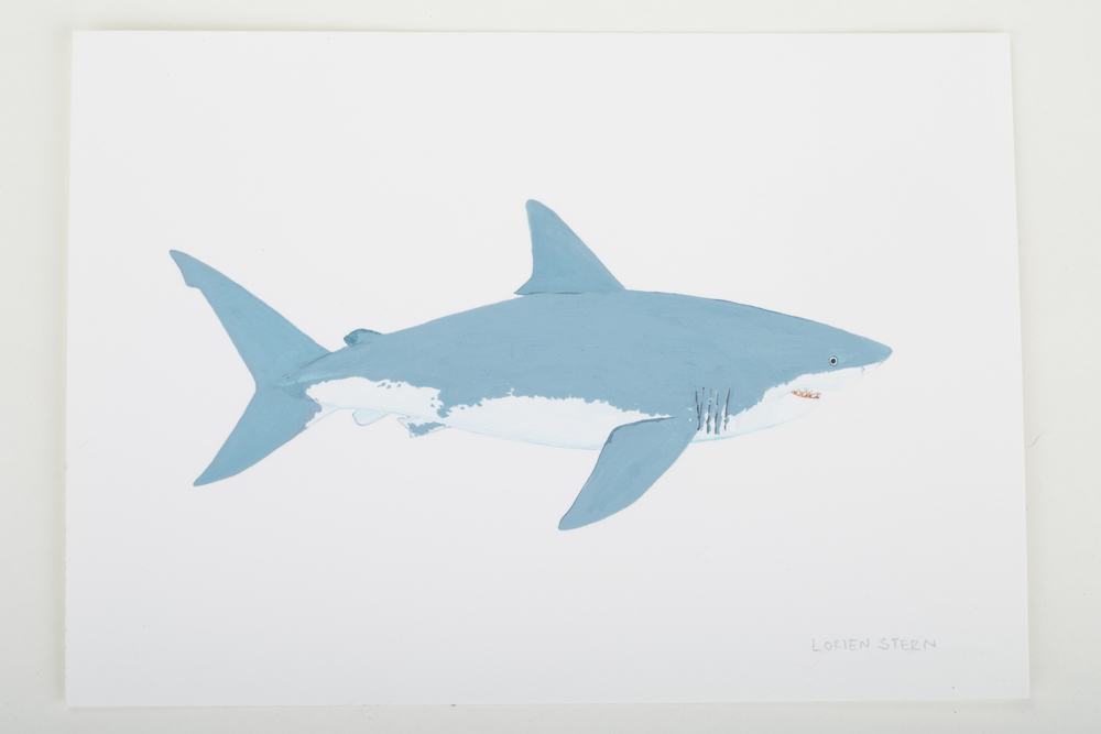 "Great White Shark 2015- 5"" x 7"". Gouache on 100% cotton acid free Stonehenge Paper"