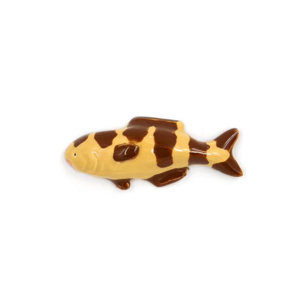 Tiny Brown Striped Fish.jpg