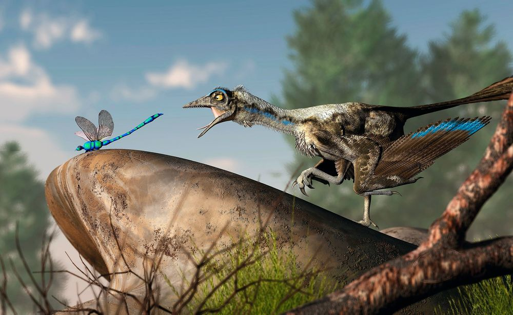 Ein Archaeopteryx auf der Jagd (Illustration: D. Eskridge/Stocktrek Images/Getty)