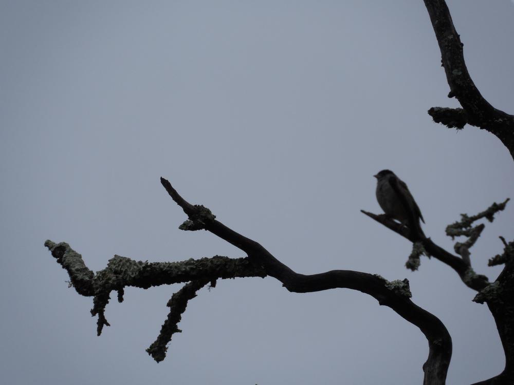 resting bird.JPG