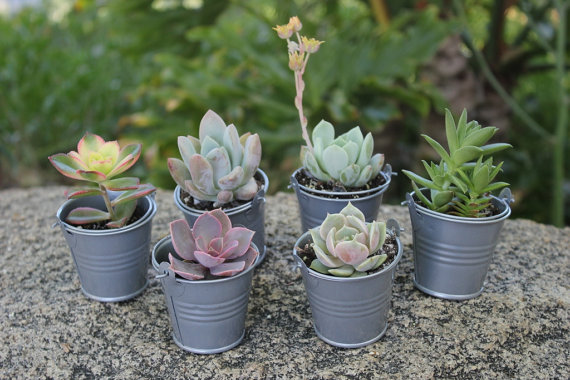 wedding succulents by thesucculentsource