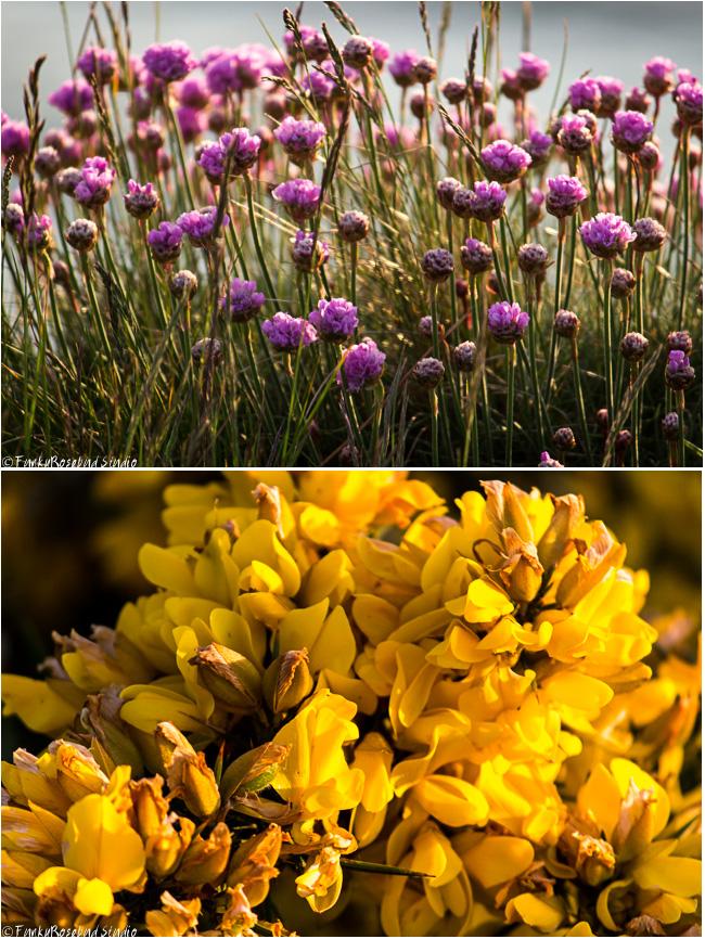 cliff flowers.jpg