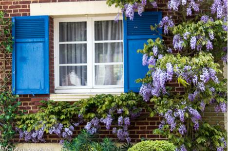 wisteria house.jpg