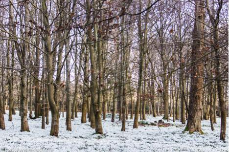 snowdrop drift.jpg