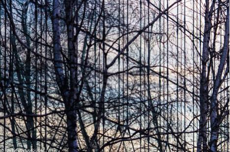 treelines.jpg