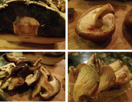 mushroom square.png