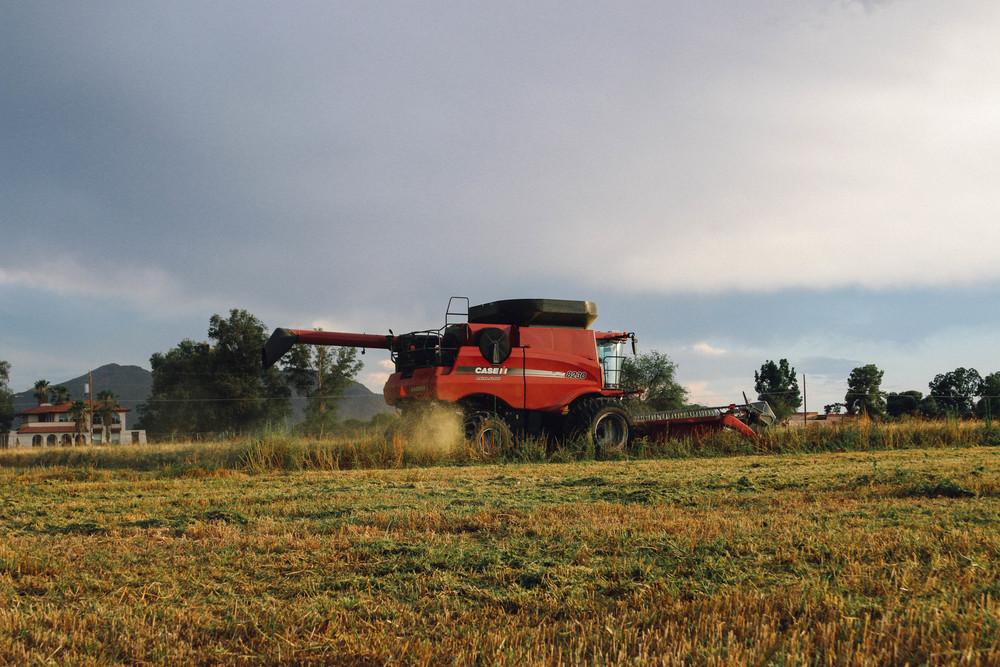 harvest 2015-6.jpg