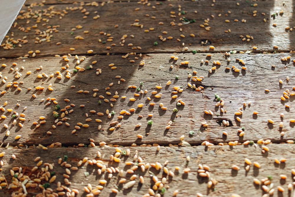 harvest 2015-5.jpg