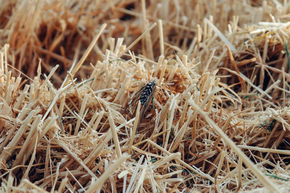 harvest 2015-7.jpg